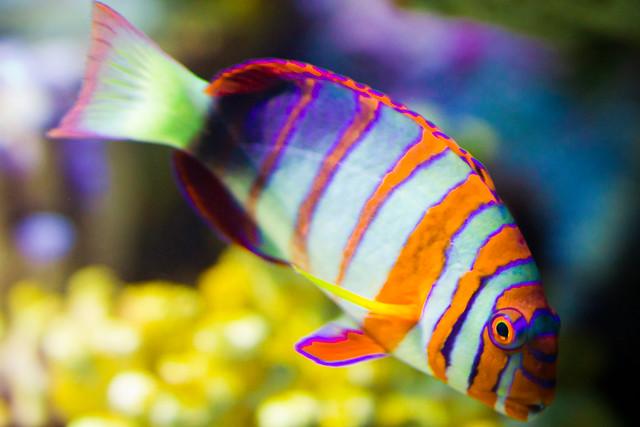 A Colorful Fish At The Aquarium Flickr Photo Sharing
