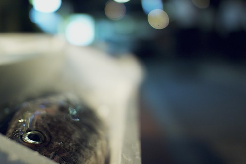 street fish ice night restaurant bokeh fisheye 居酒屋 styrofoam 岐阜 gifu 散歩 魚 icebox wideopen 夜 目 30mmsigmaf14 lenswideopen canon50d fishfordinner 魚の目 岐阜市 ontonightsmenu レストラント aneyeforbokeh bokeheyed openpatiodining