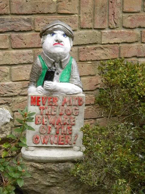 Never mind the dog....