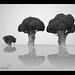 219/365 - Explored - Thank You Very Much! by debsij