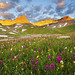 Wildflowers @ Upper Ice Lake Basin - Silverton, Colorado