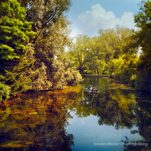 trees summer lake canada reflection nature water landscape mirror boat scenery kayak august explore tranquillity torontoislands