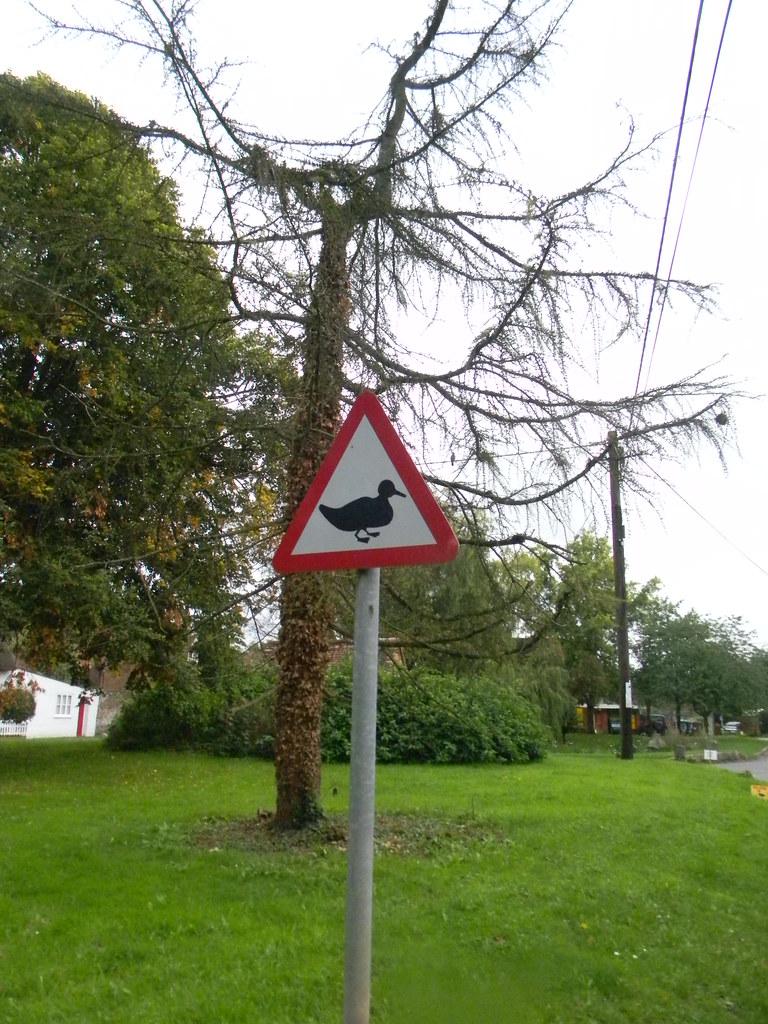Duck sign. N Waltham Overton Circular