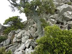 Punta di a Cuperchjata : le chaos de blocs sous le sommet