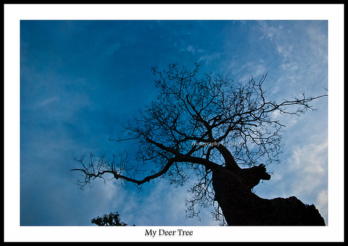 My Deer Tree