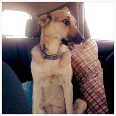 Tidbit fooling around on the way to Burr Oak.