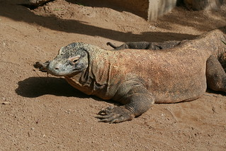 Tortoise 의 이미지. zoo reptile komodo tarongazoo komododragon bymary