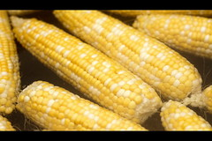 fish(0.0), dish(0.0), sweet corn(1.0), food grain(1.0), corn kernels(1.0), vegetarian food(1.0), maize(1.0), corn on the cob(1.0), food(1.0), corn on the cob(1.0), cuisine(1.0),