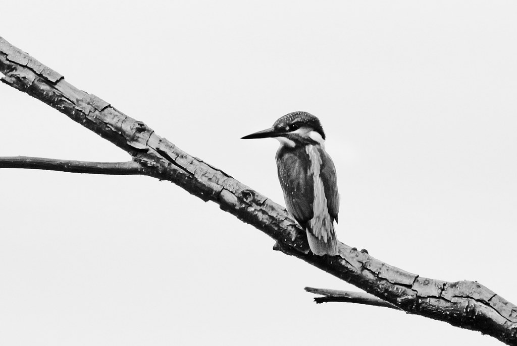 15 Amazing Black & White Wildlife Images That Will Leave You Spellbound