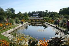 Seeroseteich - Botanischer Garten München