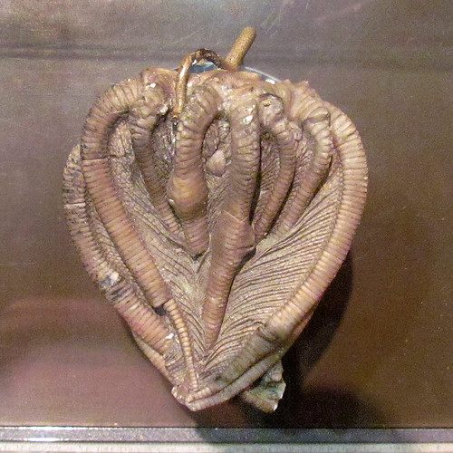Crinoid Crown