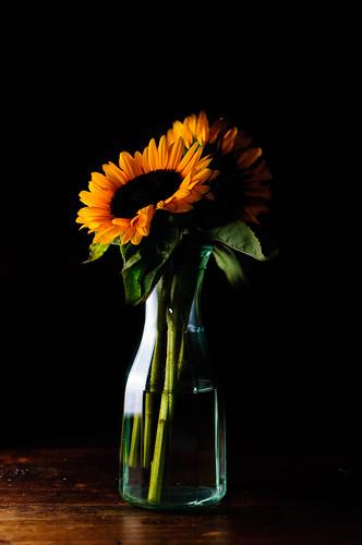 [フリー画像素材] 花・植物, 向日葵・ヒマワリ, 花瓶 ID:201112101200