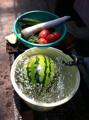 楽しく食育をするアイデア!子どもとベランダでもできる家庭菜園を始めようの画像1