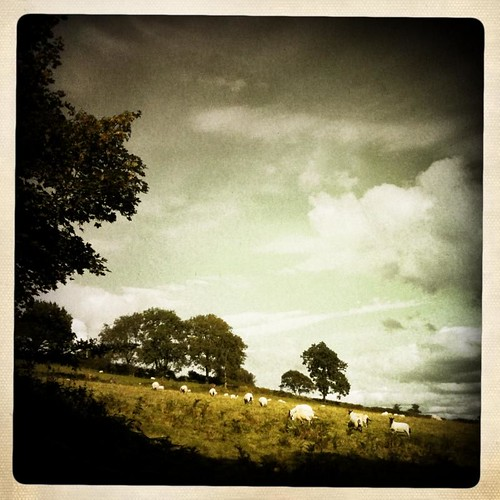 holiday wales countryside view sheep farm farming hills grainy vignette iphone august2011 iphoneography hipstamatic inas1969 coedegof libatique73