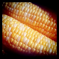 dish(0.0), sweet corn(1.0), food grain(1.0), corn kernels(1.0), vegetarian food(1.0), maize(1.0), corn on the cob(1.0), produce(1.0), food(1.0), corn on the cob(1.0), cuisine(1.0),