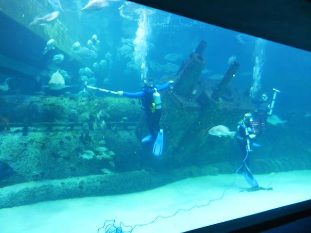 Image Result For Aquariums In Nc