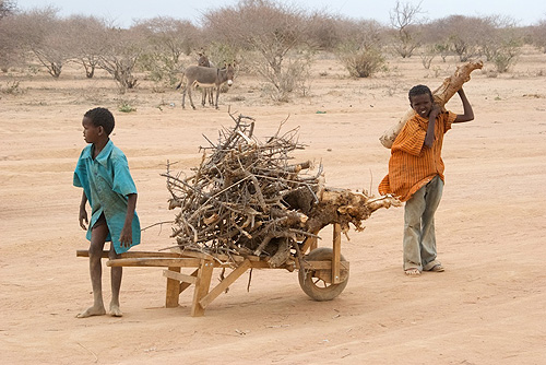 Kids transporting wood for fires and fences