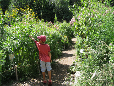 A young visitor hunts for butterflies along the Discovery Garden meadow path. Photo by Ashley Gamell.