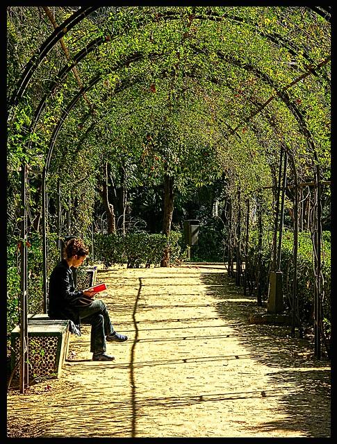 Lectora en el parque  The reading in the park