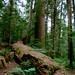 The Cascades & Snoqualmie