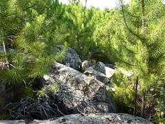 Les rochers du 2ème bois de pins