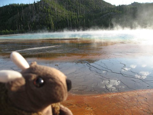 Buddy Bison at the Grand Prismatic Spring in Yellowstone National Park.