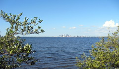 Tampa - Ballast Point Park - Downtown Tampa Skyline Across Hillsborough Bay - Through The Bushes (2)