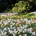 Ascott House Gardens, Buckinghamshire, UK | National Trust gardens - meadows filled with flowering spring bulbs (1 of 22)