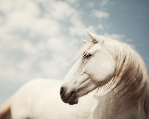 Wild is the wind - Horse Photography