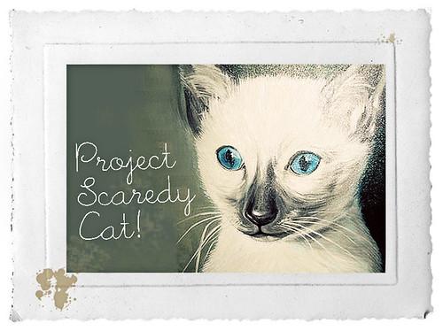 projectcat