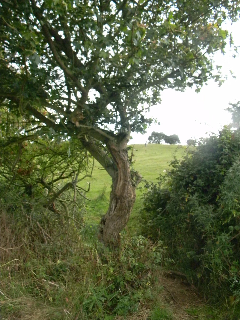 tree Moreton-in-Marsh Circular