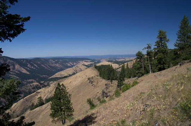 Cougar Ridge