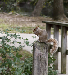 Snacking Squirrell