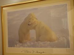 水, 2011-08-10 18:22 - 可愛い熊さんのポスター