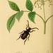 British entomology. v.2