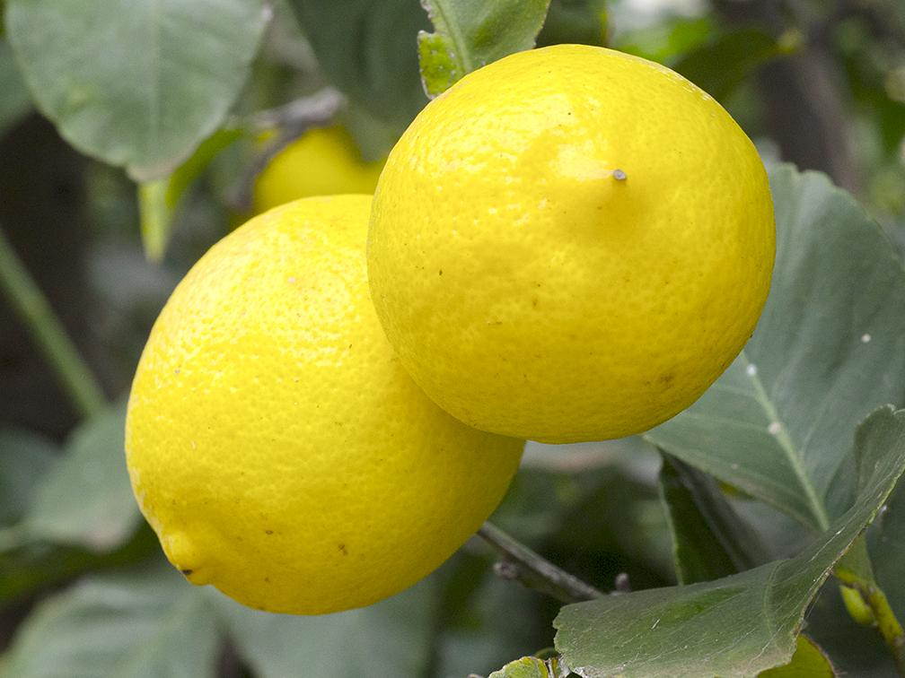 lemons raw, without peel