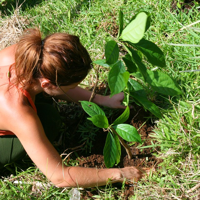 planting trees in the rainforest | Flickr - Photo Sharing!