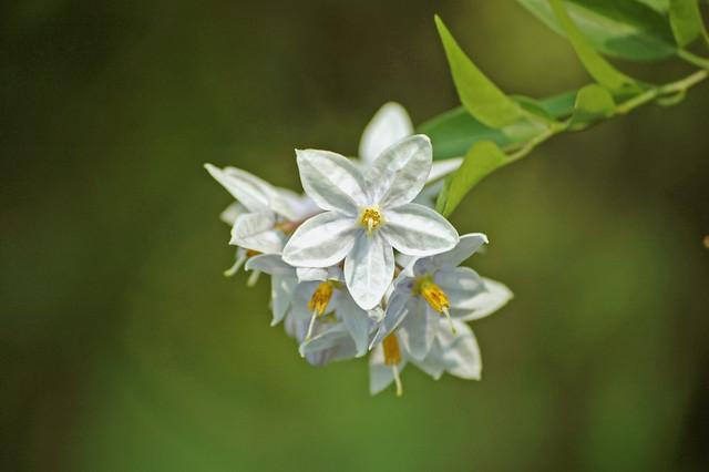 il linguaggio segreto dei fiori/1  Flickr - Photo Sharing!