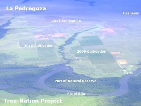 colombia climatechange co2 reforestation 2011 vichada treenation lapedregoza
