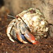 hermit crabs and car 004
