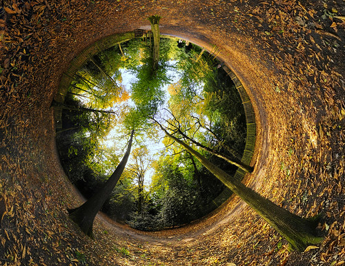 park wood uk trees england panorama holland green london forest 360 planet stereographic