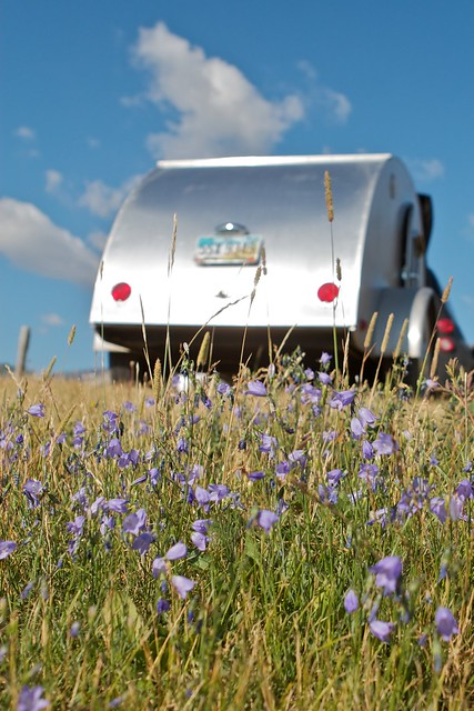 Wildflowers and a Teardrop Travel Trailer in Glacier National Park, Montana, August 12, 2011