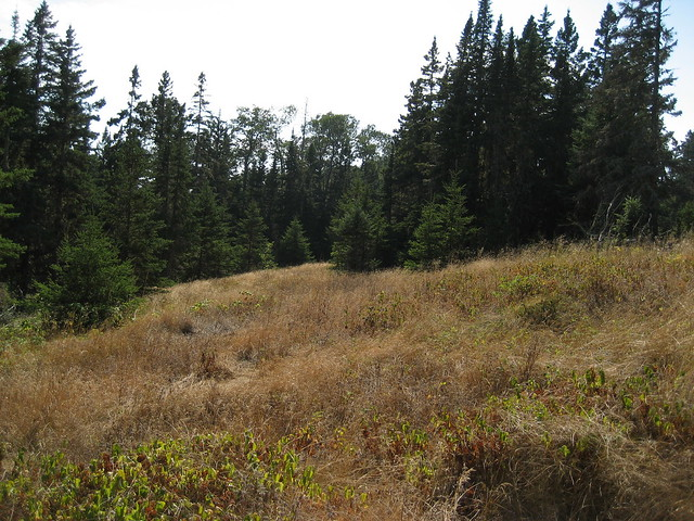 Agribank: Meadow On The Greenstone Trail, Isle Royale National Park