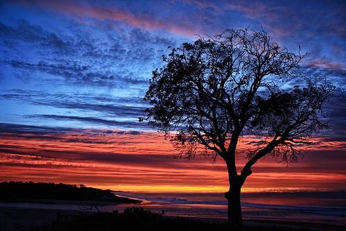 lake landscape dawn colours banksia cathie