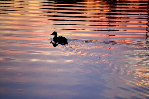 ohio water sunrise duck westerville