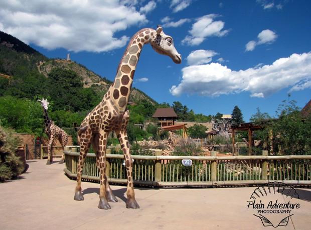 top 10 zoo exhibits. Black Bedroom Furniture Sets. Home Design Ideas