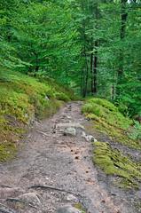 Track - Photo of Lambach