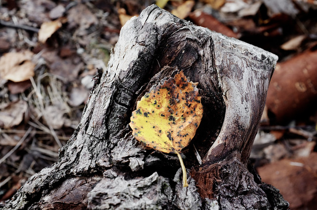 A leaf on a stump