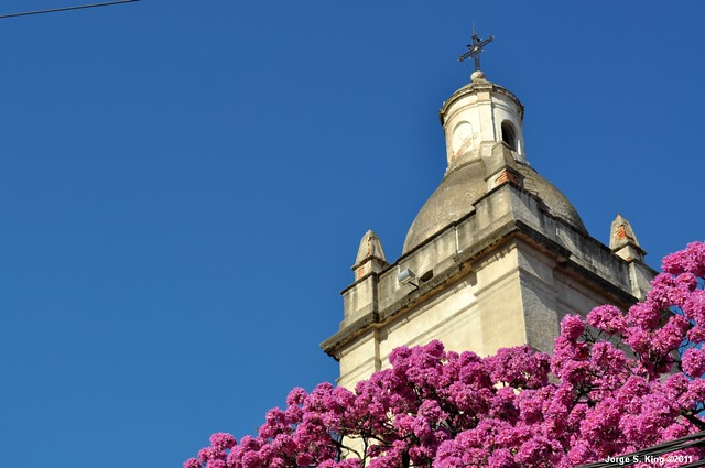 Lapachos 2011 XV