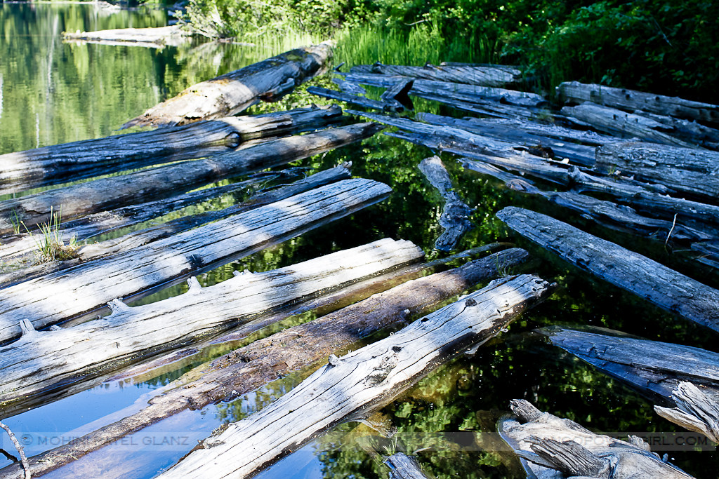 floating logs on lake talapus